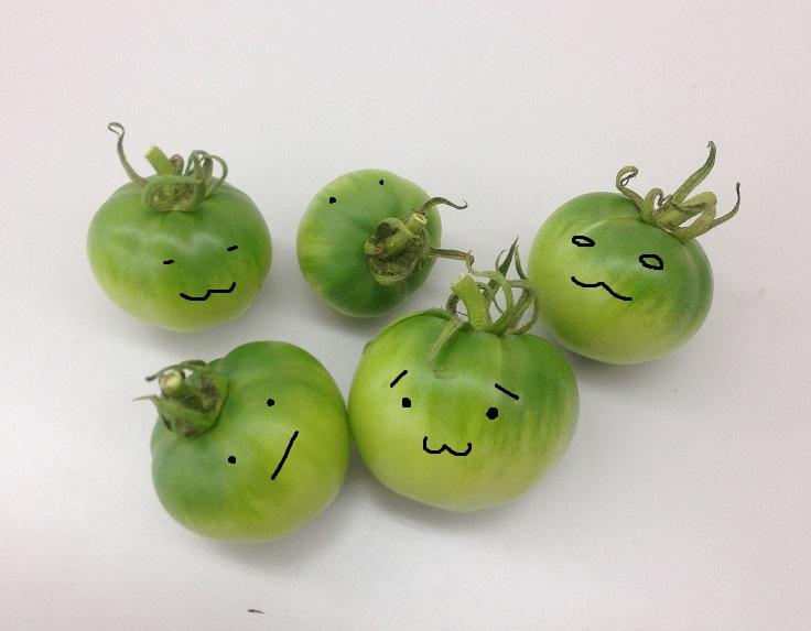 落ちちゃったトマト.JPG